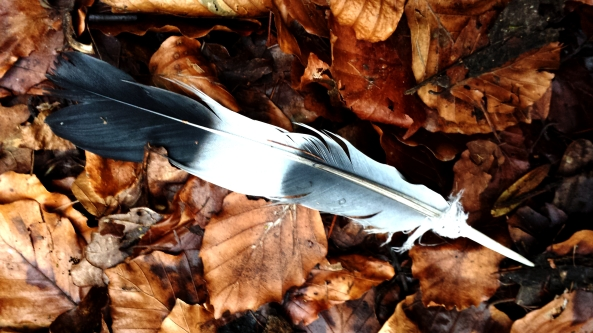 Beautiful shaman feather